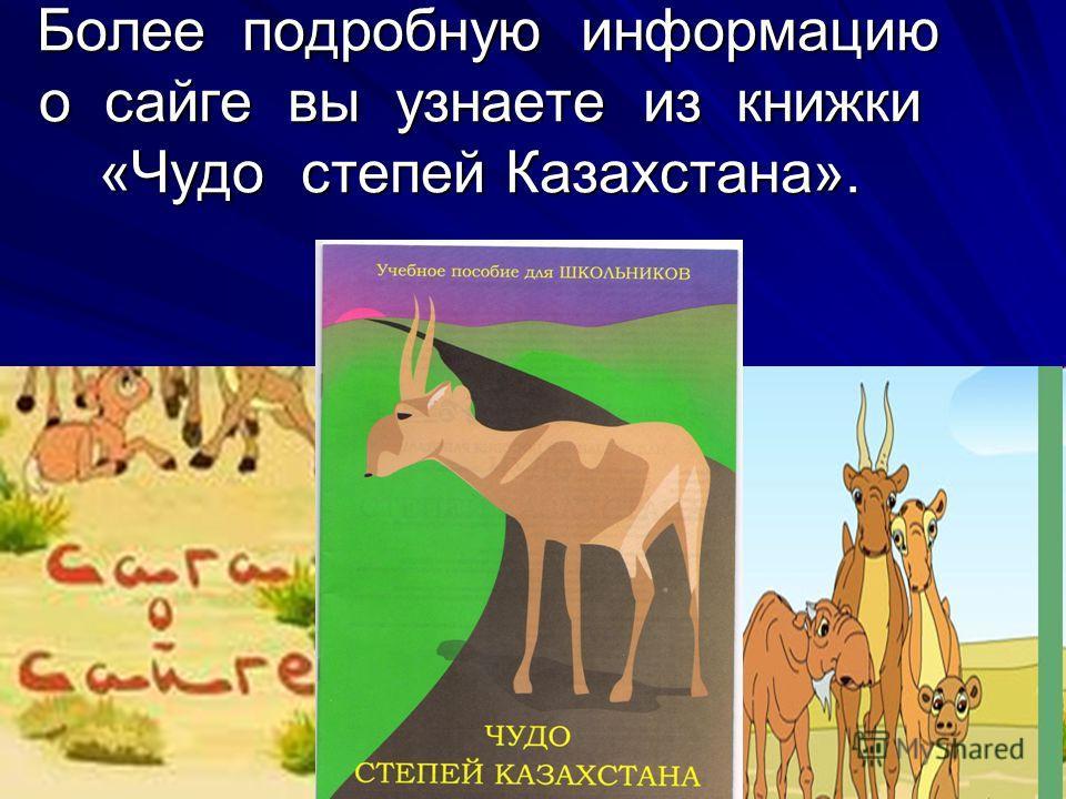 Более подробную информацию о сайге вы узнаете из книжки «Чудо степей Казахстана». Более подробную информацию о сайге вы узнаете из книжки «Чудо степей Казахстана».
