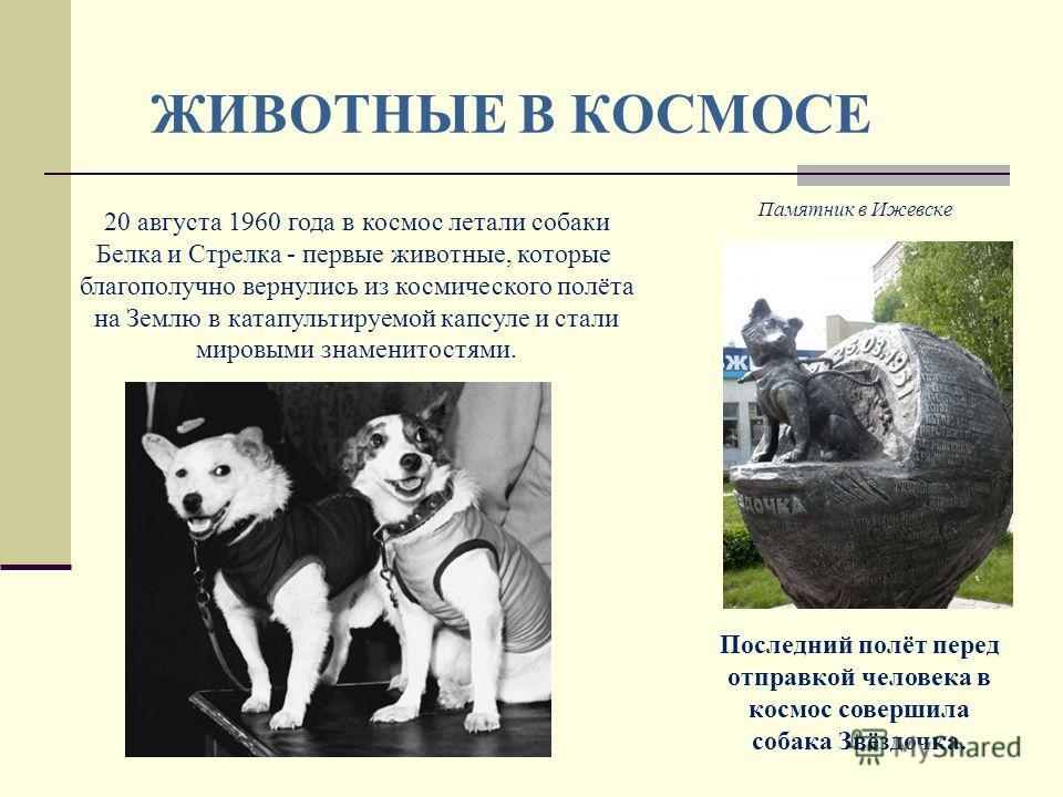 ЖИВОТНЫЕ В КОСМОСЕ 20 августа 1960 года в космос летали собаки Белка и Стрелка - первые животные, которые благополучно вернулись из космического полёта на Землю в катапультируемой капсуле и стали мировыми знаменитостями. Последний полёт перед отправк