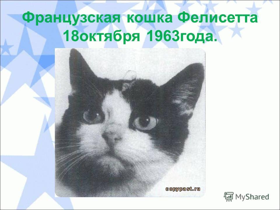 Французская кошка Фелисетта 18 октября 1963 года.