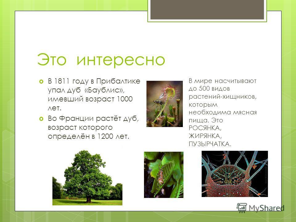 Это интересно В 1811 году в Прибалтике упал дуб «Баублис», имевший возраст 1000 лет. Во Франции растёт дуб, возраст которого определён в 1200 лет. В мире насчитывают до 500 видов растений-хищников, которым необходима мясная пища. Это РОСЯНКА, ЖИРЯНКА