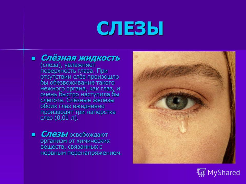 СЛЕЗЫ Слёзная жидкость (слеза), увлажняет поверхность глаза. При отсутствии слёз произошло бы обезвоживание такого нежного органа, как глаз, и очень быстро наступила бы слепота. Слёзные железы обоих глаз ежедневно производят три наперстка слез (0,01