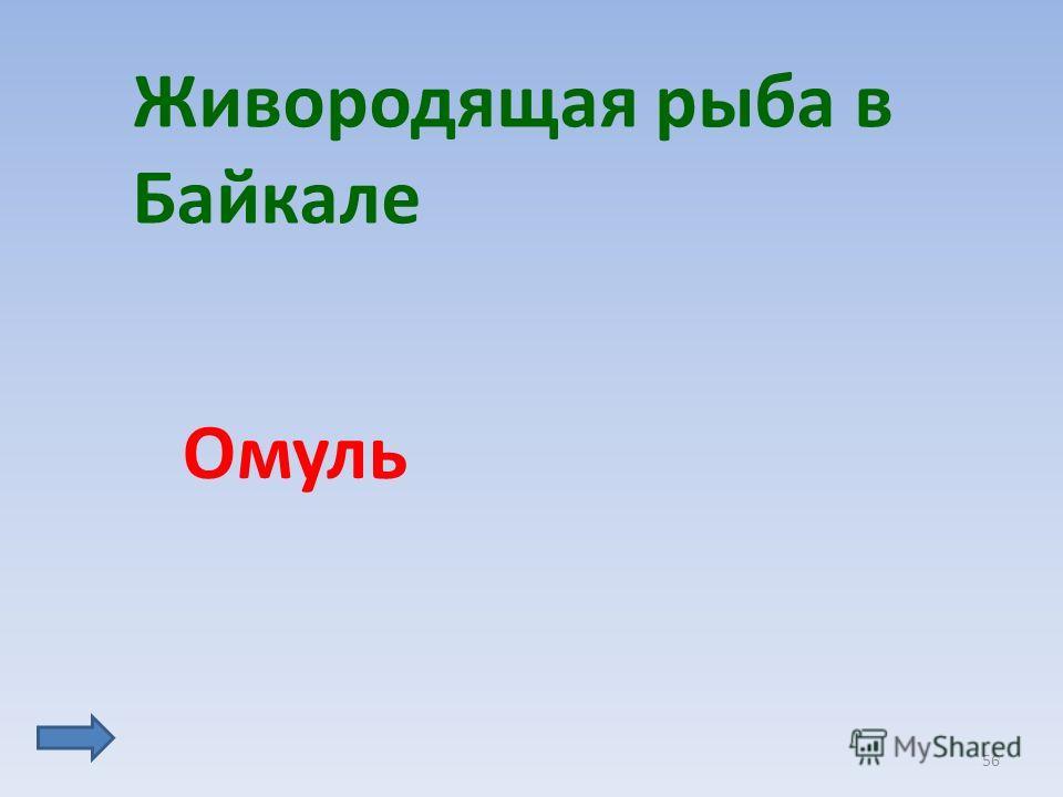 56 Живородящая рыба в Байкале Омуль