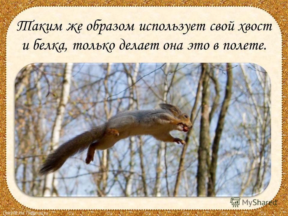 FokinaLida.75@mail.ru Таким же образом использует свой хвост и белка, только делает она это в полете.