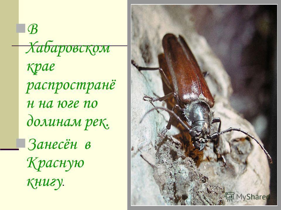 В Хабаровском крае распространё н на юге по долинам рек. Занесён в Красную книгу.