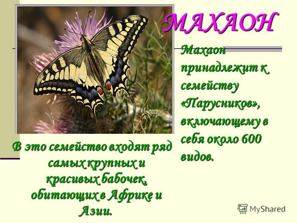МАХАОН В это семейство входят ряд самых крупных и красивых бабочек, обитающих в Африке и Азии. В это семейство входят ряд самых крупных и красивых бабочек, обитающих в Африке и Азии. Махаон принадлежит к семейству «Парусников», включающему в себя око
