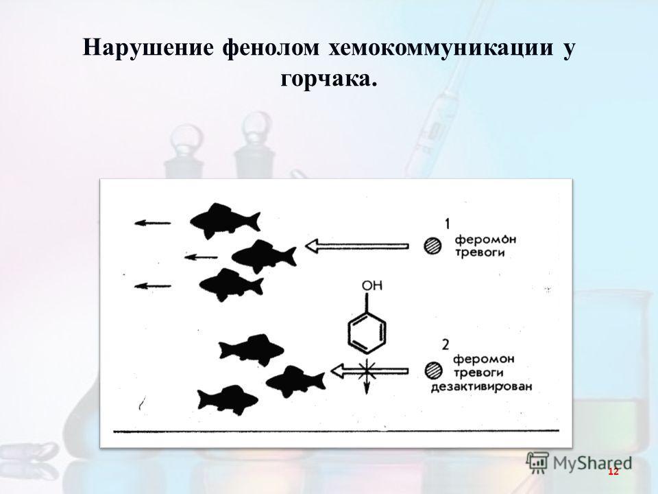 Нарушение фенолом хемокоммуникации у горчака. 12