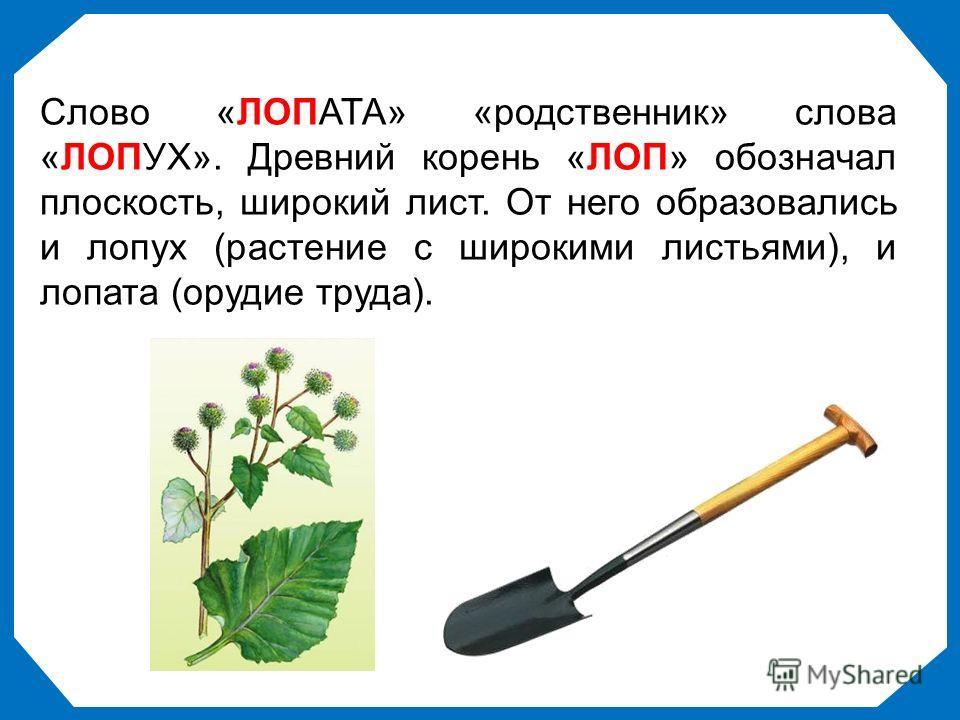 Слово «ЛОПАТА» «родственник» слова «ЛОПУХ». Древний корень «ЛОП» обозначал плоскость, широкий лист. От него образовались и лопух (растение с широкими листьями), и лопата (орудие труда).