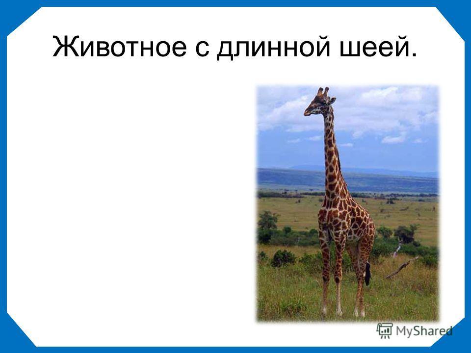 Животное с длинной шеей.