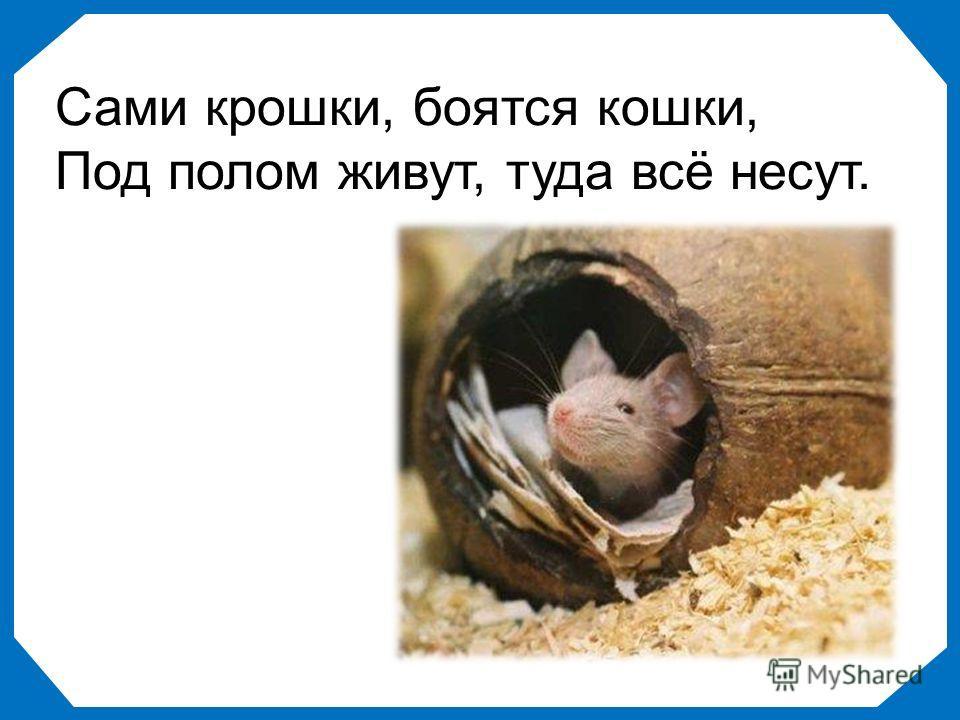 Сами крошки, боятся кошки, Под полом живут, туда всё несут.