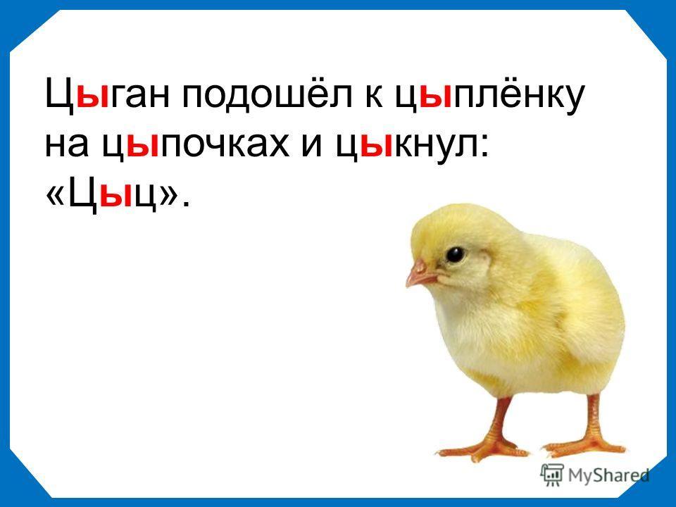 Цыган подошёл к цыплёнку на цыпочках и цыкнул: «Цыц».