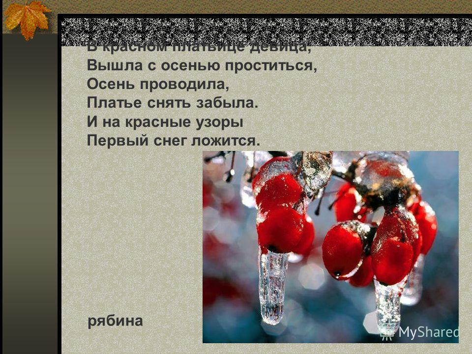 В красном платьице девица, Вышла с осенью проститься, Осень проводила, Платье снять забыла. И на красные узоры Первый снег ложится. рябина