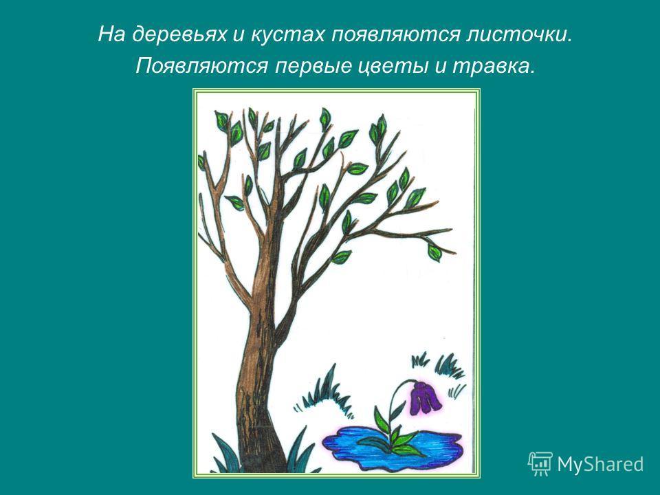 На деревьях и кустах появляются листочки. Появляются первые цветы и травка.