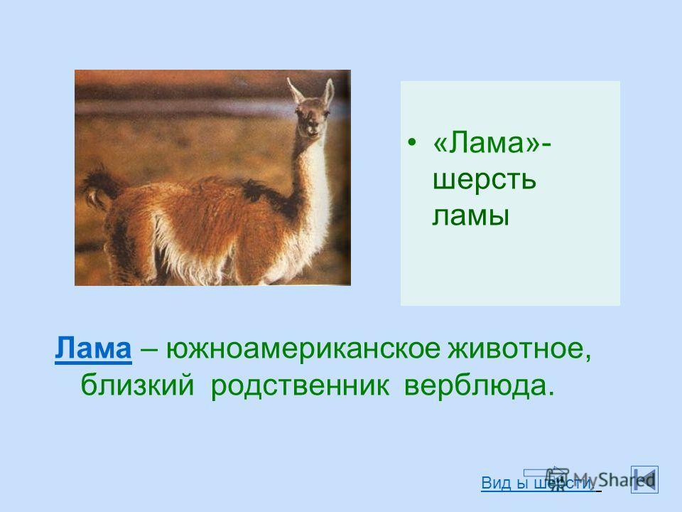 «Лама»- шерсть ламы Лама Лама – южноамериканское животное, близкий родственник верблюда. Вид ы шерсти.