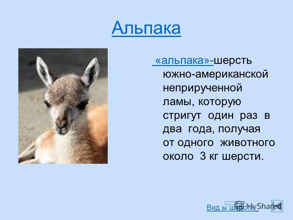 Альпака «альпака»- «альпака»-шерсть южно-американской неприрученной ламы, которую стригут один раз в два года, получая от одного животного около 3 кг шерсти. Вид ы шерсти.