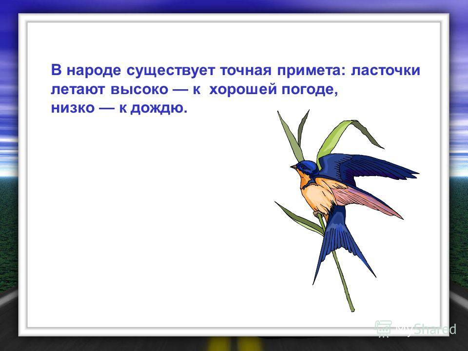 В народе существует точная примета: ласточки летают высоко к хорошей погоде, низко к дождю.