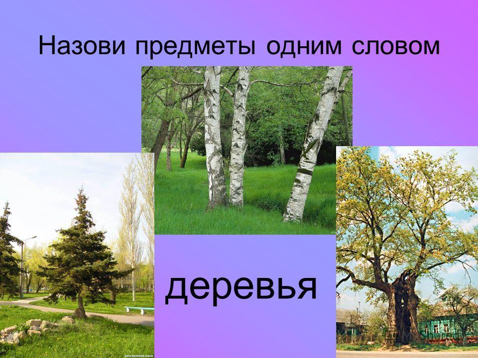 Назови предметы одним словом деревья
