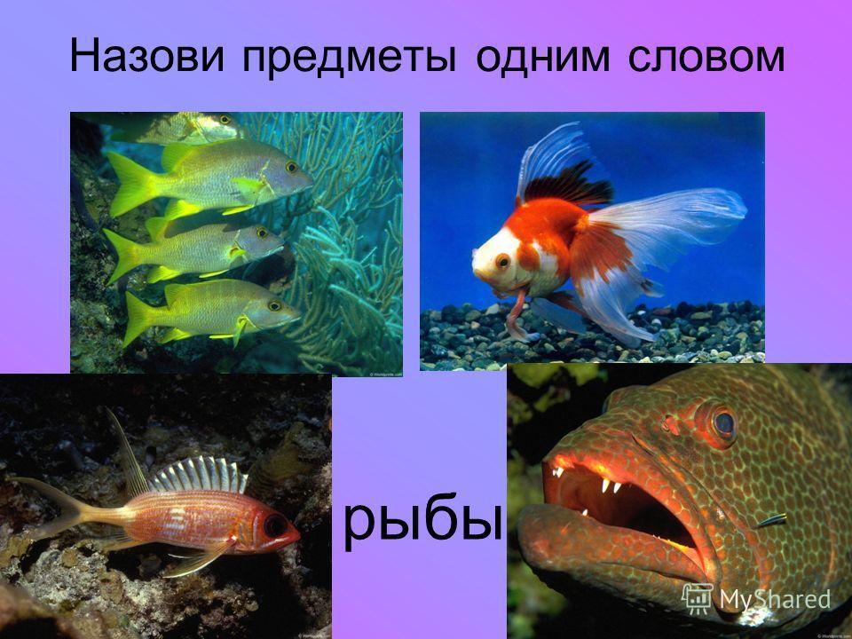 Назови предметы одним словом рыбы