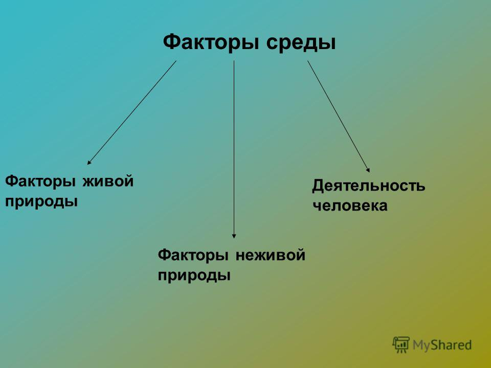 Факторы среды Факторы живой природы Факторы неживой природы Деятельность человека
