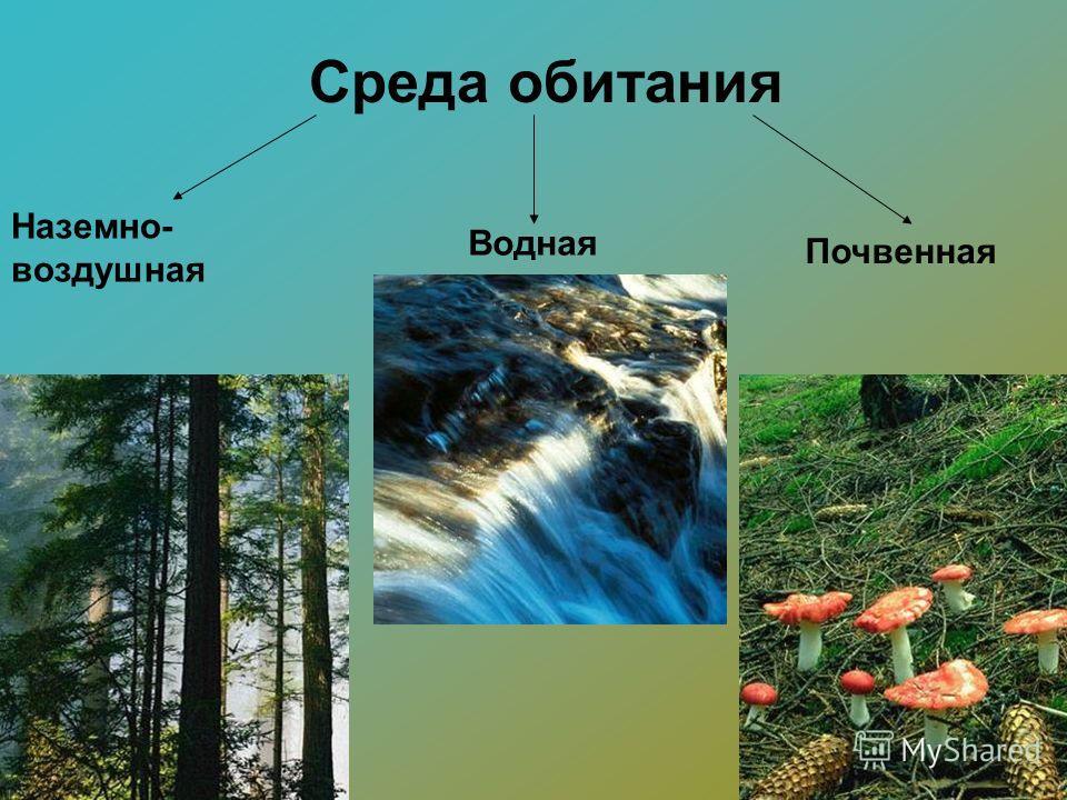 Среда обитания Наземно- воздушная Водная Почвенная