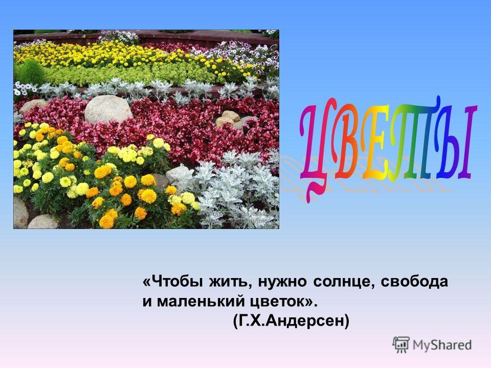 «Чтобы жить, нужно солнце, свобода и маленький цветок». (Г.Х.Андерсен)