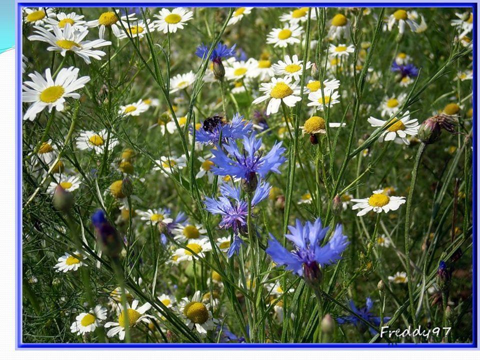Весной и в начале лета равнины и склоны алтайских гор представляют собой красивейший ковёр разноцветных цветов: яркие оранжевые огоньки, тёмно-синие и розовые тюльпаны, голубые колокольчики, гвоздики, ромашки, белые и жёлтые лютики.