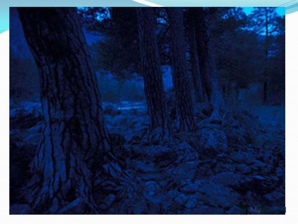 Ленточный бор Происхождение ленточных сосновых боров имеет интересную историю, которая связана с периодом, когда на юге Западно-Сибирской низменности находилось большое море, сток воды из него проходил по глубоким ложбинам в сторону Аральского бассей