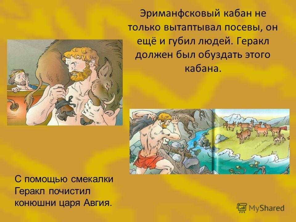 Эриманфсковый кабан не только вытаптывал посевы, он ещё и губил людей. Геракл должен был обуздать этого кабана. С помощью смекалки Геракл почистил конюшни царя Авгия.