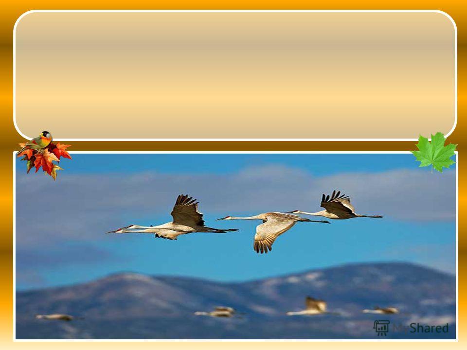 ПТИЦЫ ПУТЬ ДАЛЁКИЙ ОТПРАВИЛИСЬ ЮГЮГЮГЮГ В НА Птицы отправились в далёкий путь на юг.