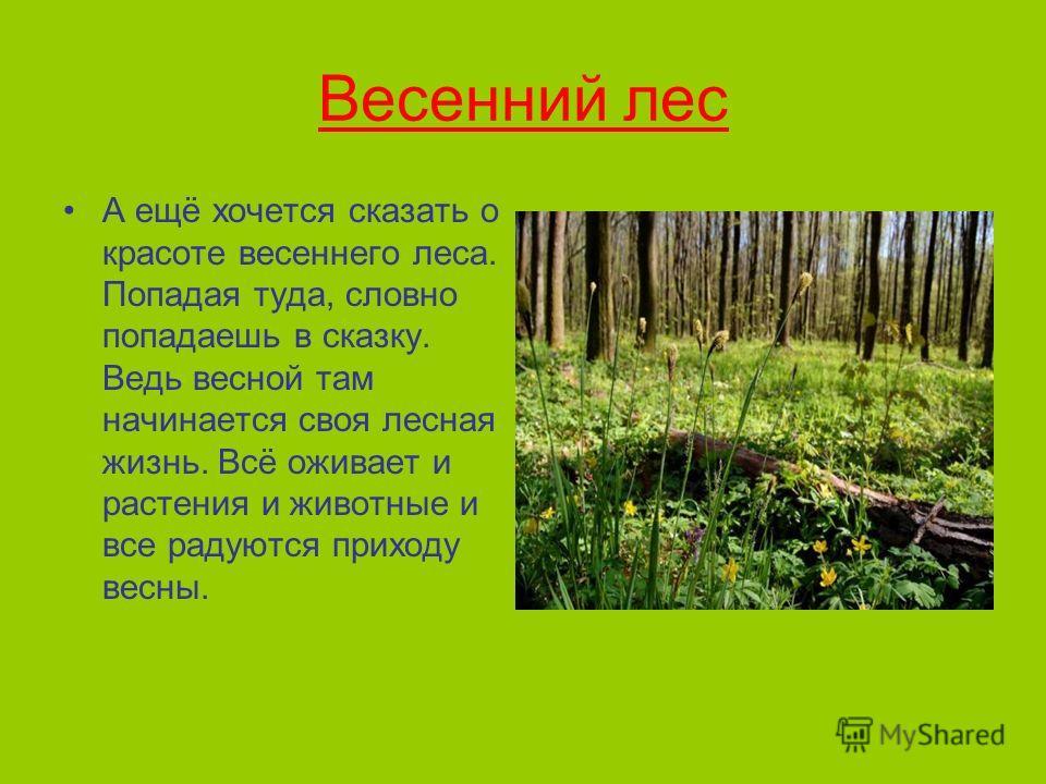 Весенний лес А ещё хочется сказать о красоте весеннего леса. Попадая туда, словно попадаешь в сказку. Ведь весной там начинается своя лесная жизнь. Всё оживает и растения и животные и все радуются приходу весны.