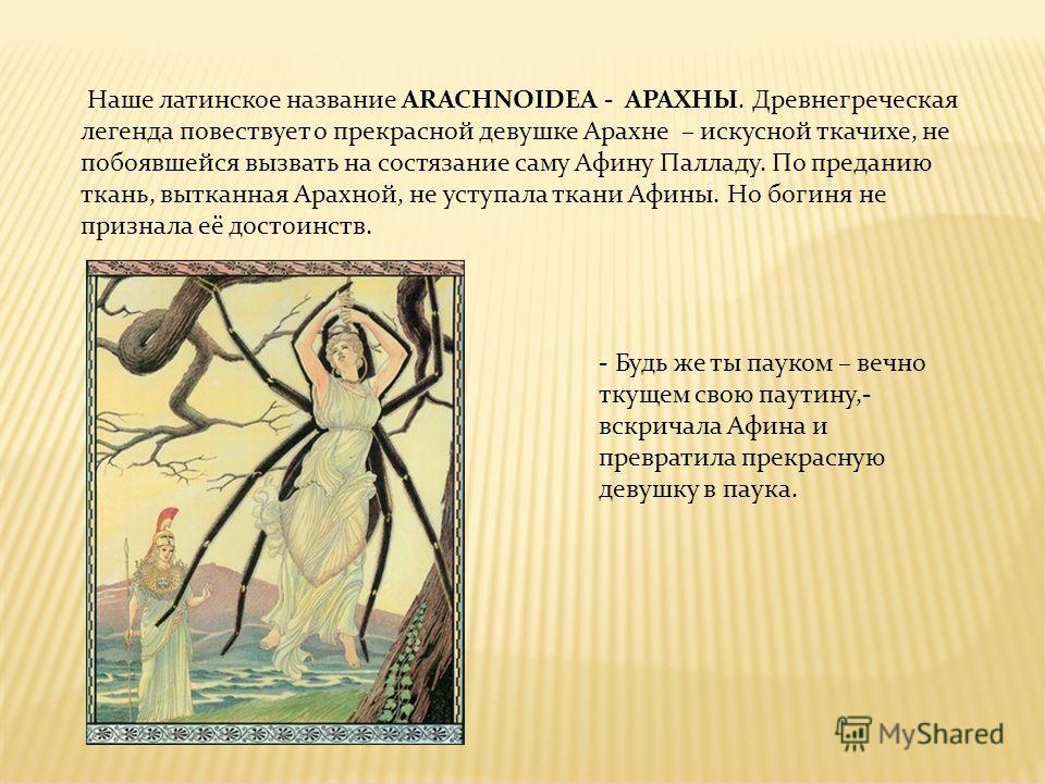 Наше латинское название ARACHNOIDEA - АРАХНЫ. Древнегреческая легенда повествует о прекрасной девушке Арахне – искусной ткачихе, не побоявшейся вызвать на состязание саму Афину Палладу. По преданию ткань, вытканная Арахной, не уступала ткани Афины. Н