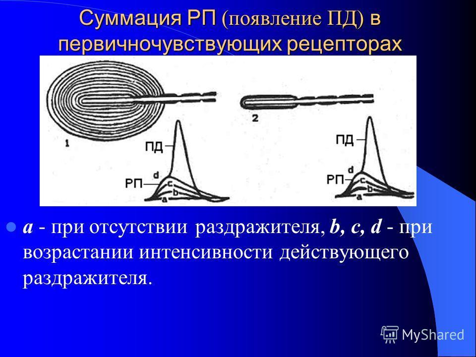 Суммация РП (появление ПД) в первичночувствующих рецепторах а - при отсутствии раздражителя, b, c, d - при возрастании интенсивности действующего раздражителя.