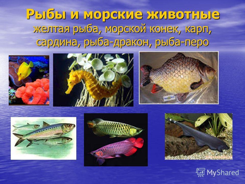 Рыбы и морские животные желтая рыба, морской конек, карп, сардина, рыба-дракон, рыба-перо