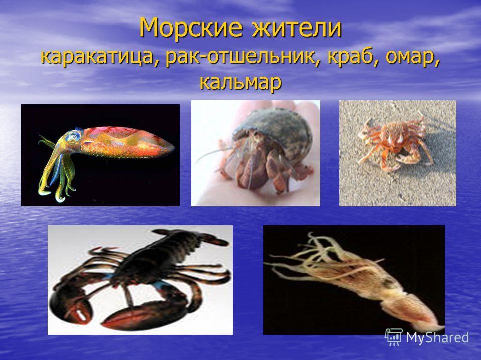Морские жители каракатица, рак-отшельник, краб, омар, кальмар