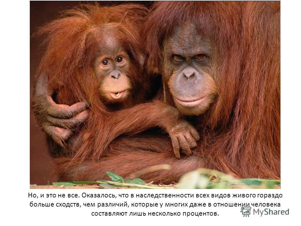 Но, и это не все. Оказалось, что в наследственности всех видов живого гораздо больше сходств, чем различий, которые у многих даже в отношении человека составляют лишь несколько процентов.