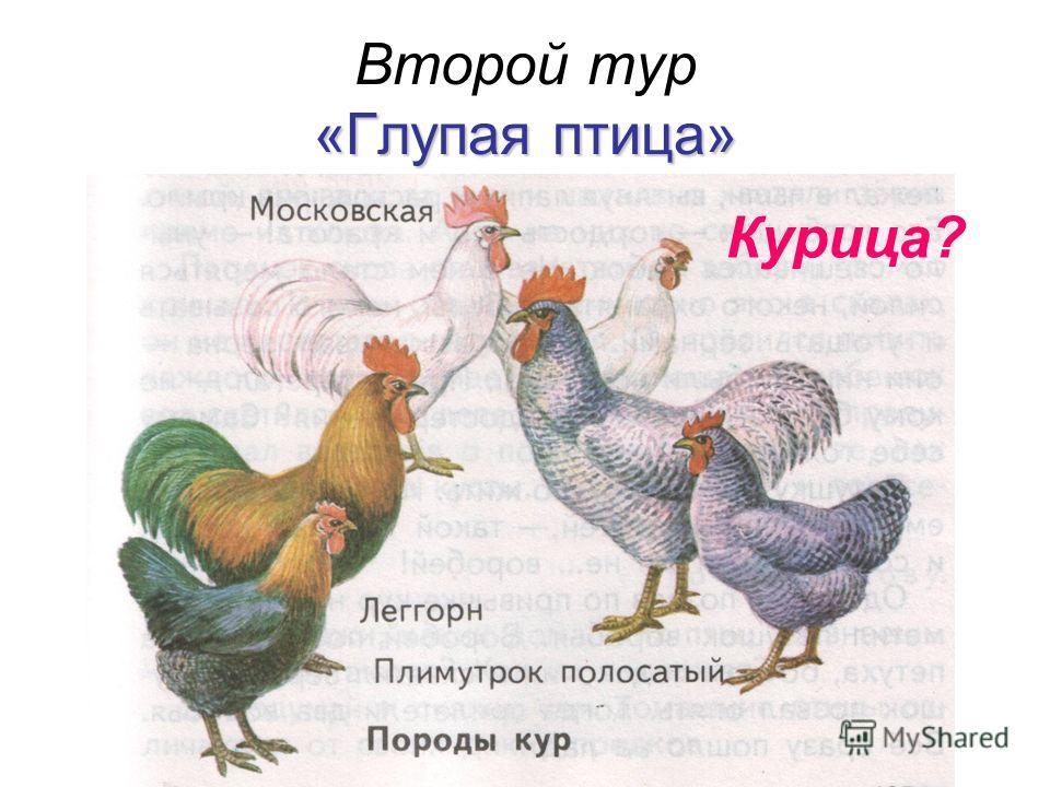 «Глупая птица» Второй тур «Глупая птица» Курица?