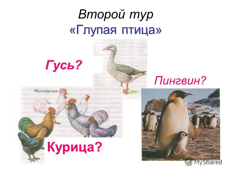 «Глупая птица» Второй тур «Глупая птица» Пингвин? Курица? Гусь?