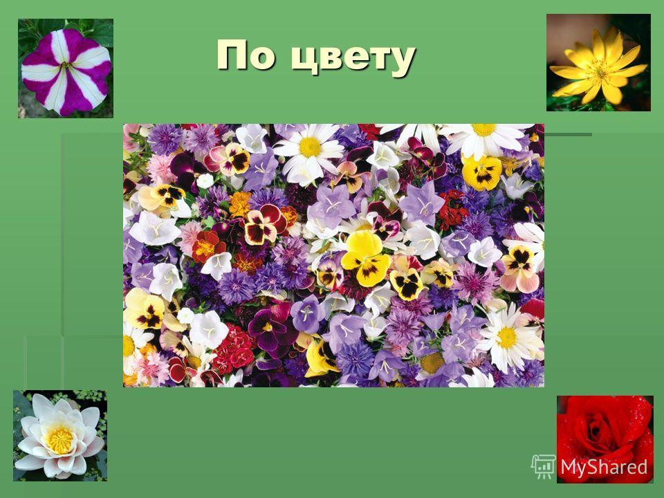 По цвету По цвету