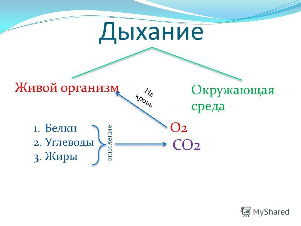 Дыхание Живой организм Окружающая среда 1. Белки 2. Углеводы 3. Жиры окисление CO2 O2 Нв кровь