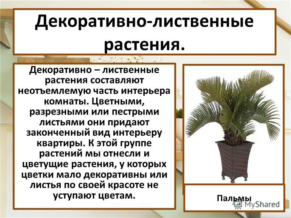 Декоративно – лиственные растения составляют неотъемлемую часть интерьера комнаты. Цветными, разрезными или пестрыми листьями они придают законченный вид интерьеру квартиры. К этой группе растений мы отнесли и цветущие растения, у которых цветки мало