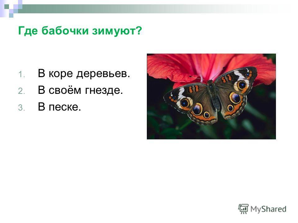 Где бабочки зимуют? 1. В коре деревьев. 2. В своём гнезде. 3. В песке.