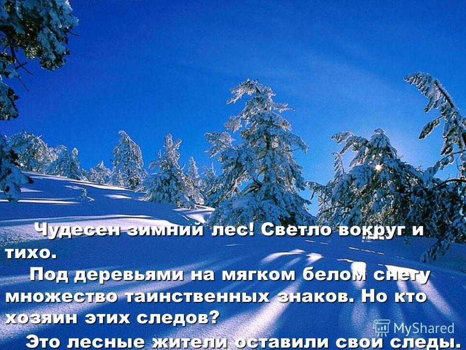 Чудесен зимний лес! Светло вокруг и тихо. Под деревьями на мягком белом снегу множество таинственных знаков. Но кто хозяин этих следов? Чудесен зимний лес! Светло вокруг и тихо. Под деревьями на мягком белом снегу множество таинственных знаков. Но кт