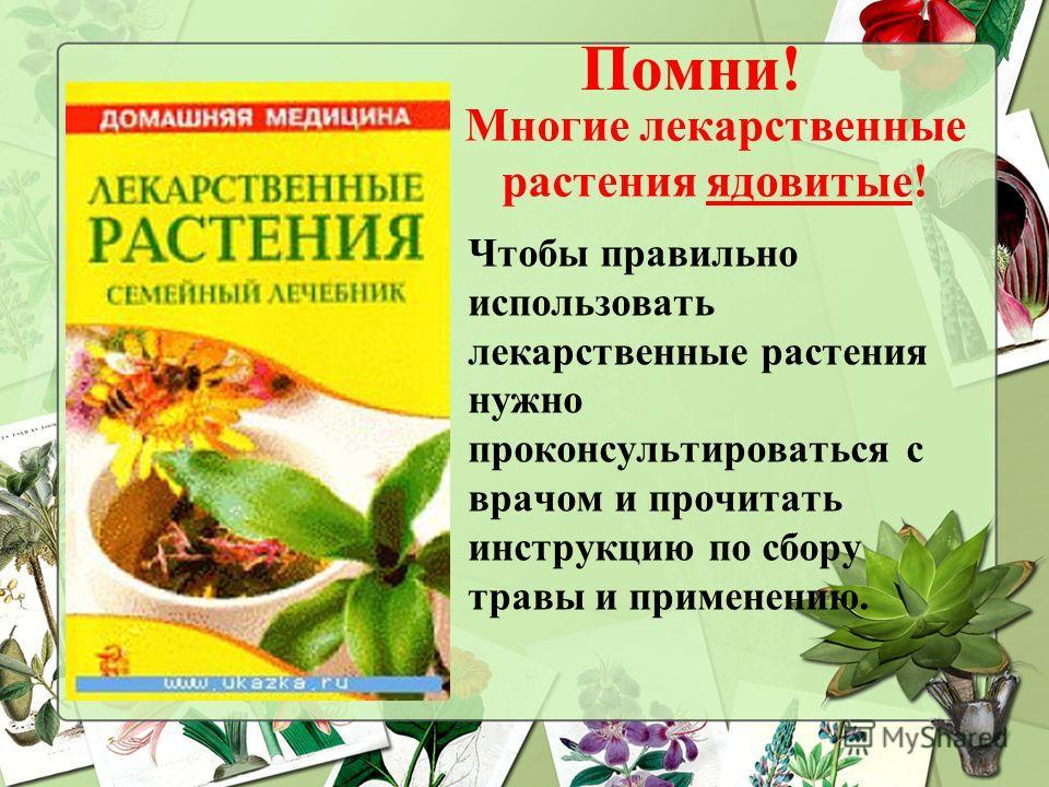 Помни! Многие лекарственные растения ядовитые! Чтобы правильно использовать лекарственные растения нужно проконсультироваться с врачом и прочитать инструкцию по сбору травы и применению.