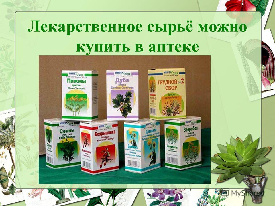 Лекарственное сырьё можно купить в аптеке