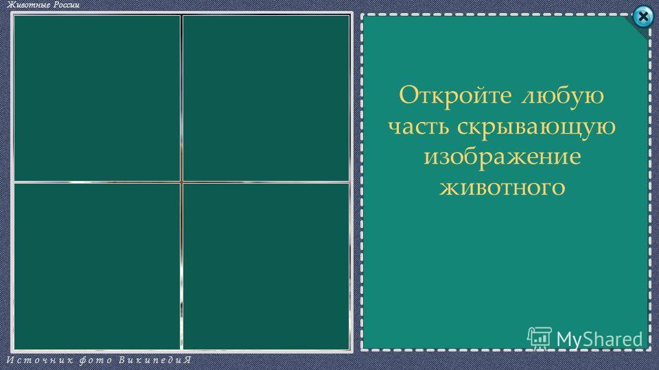 СЛОВОСЛОВО СЧЁТ Источник фото ВикипедиЯ Животные России 0 КАЕБДБ СОВТРЫ Откройте любую часть скрывающую изображение животного