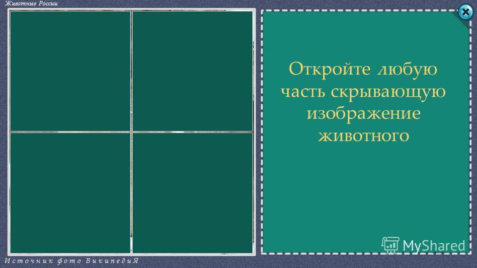 СЛОВОСЛОВО СЧЁТ Источник фото ВикипедиЯ Животные России 0 ВДАЫАР ЧПМСБО Откройте любую часть скрывающую изображение животного