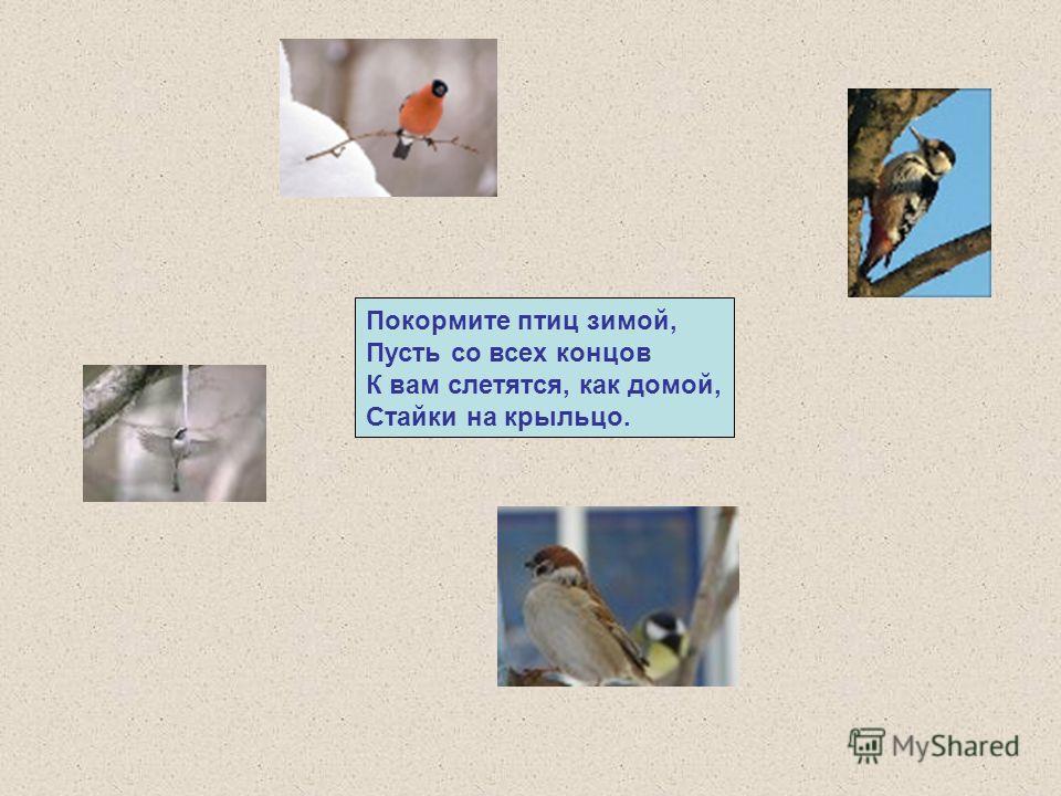 Покормите птиц зимой, Пусть со всех концов К вам слетятся, как домой, Стайки на крыльцо.