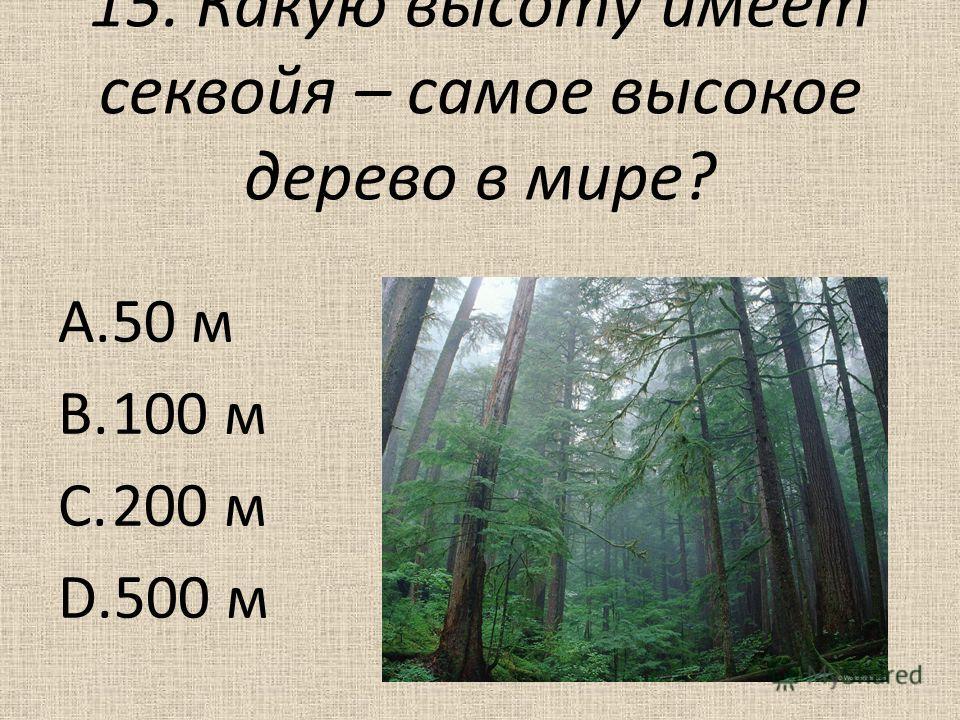 15. Какую высоту имеет секвойя – самое высокое дерево в мире? A.50 м B.100 м C.200 м D.500 м