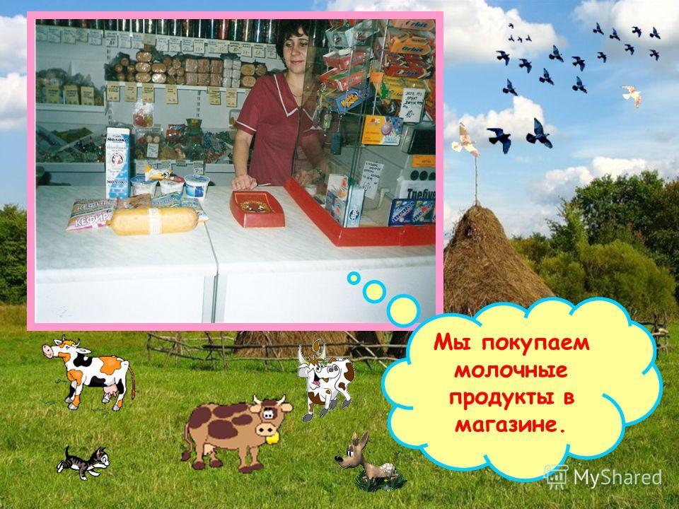 Мы покупаем молочные продукты в магазине.