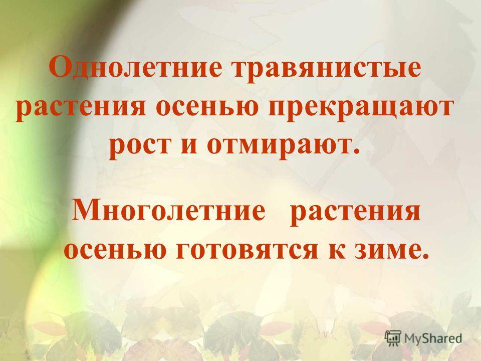 Однолетние травянистые растения осенью прекращают рост и отмирают. Многолетние растения осенью готовятся к зиме.