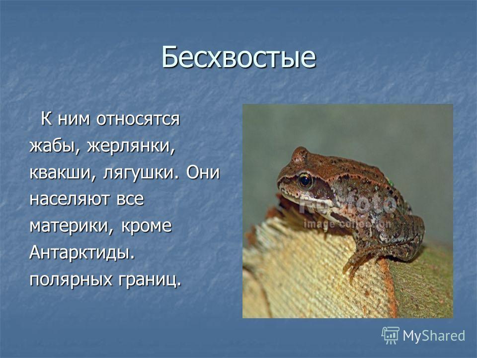 Бесхвостые К ним относятся К ним относятся жабы, жерлянки, квакши, лягушки. Они населяют все материки, кроме Антарктиды. полярных границ.